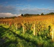 Sumber foto: http://www.miceslovakia.com/sites/default/files/wineyard_slovakia_shutterstock.jpg